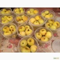 Продаю моченые яблоки (Антоновка)