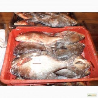Продам свежемороженую речную рыбу