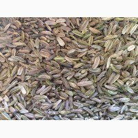 Продам семена фенхеля