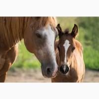 Продаю лошадей и жеребят