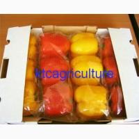 Продам болгарский перец