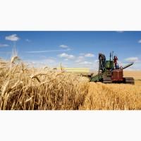 Пшеница продовольственная CIF