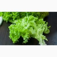Салат листовой, зелень свежая в ассортименте