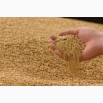 Пшеница 2 кл DAP Белоруссия