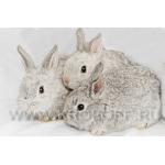 Молодняк породистых кроликов мясных пород