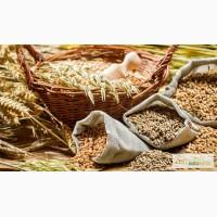 КФХ продаст Пшеницу 3 класс
