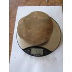 Картофель Калиброванный, Очень Крупный 200-500г Каждый Клубень Купим Оптом