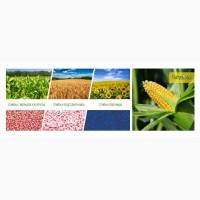 Семена кукурузы Краснодарской селекции