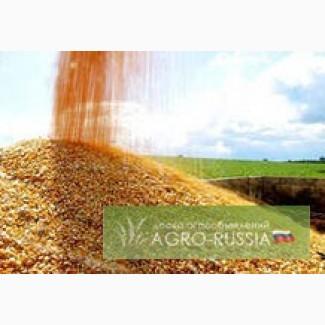 Кукуруза 3 класса