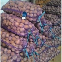 Картофель молодой, оптом со склада хозяйства