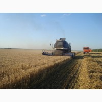Ищу инвестиции в сельское хозяйство