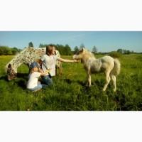 Туры для детей, пони ферма