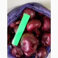 Продаем лук фиолетовый