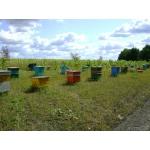 Продаются пчёлы-семьи, ульи, пакеты, матки.