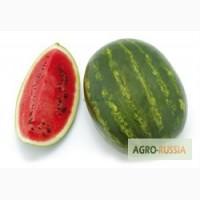 Семена арбуза Кримсон Руби (Саката)