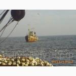 Хамса 24 часа доступные цены Крымское качество