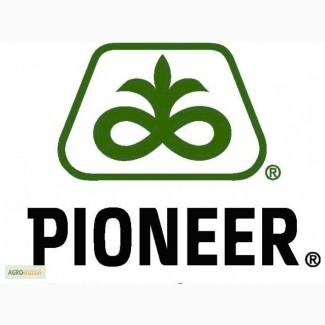 Гибриды семена подсолнечника Пионер (Pioneer)