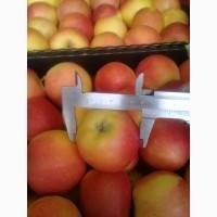 Сербское предложение по яблокам