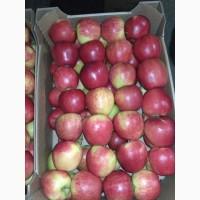 Закупаю 1-2 сорт яблоки