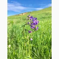 Синюха трава