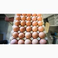 Купим яйцо по предоплате (СО, насечка, загрязненка, С2) Вывезем с любого региона