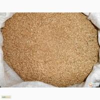 Пшеница в мешках (Бесплатная доставка)