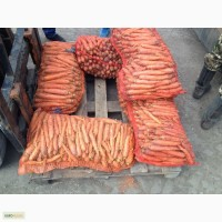 Продаем морковь сорт балтимор