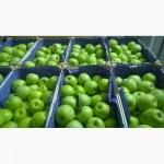 Свежие яблоки сорт Муцу