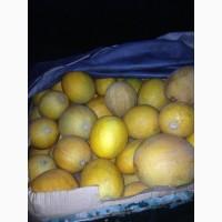 Продам семена дыни сорт Стрельчанка