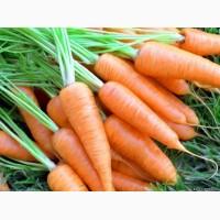 Морковь столовый оптом