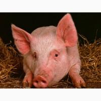 Ликвидация свинофермы