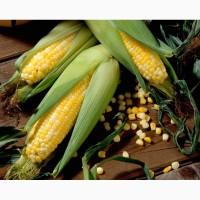 Гибриды семена кукурузы ДКС 3511, ДКС 4014 Monsanto, Монсанта