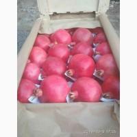 Продам отборные фрукты, готовые к отгрузке