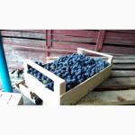 Шпоновые ящики для винограда в АР КРЫМ