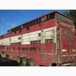 Перевозка скотины живым весом.Скотовозы
