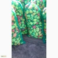 Овощи с Алтая