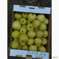 Яблоки с Краснод. края(от производителя)