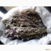 Лек травы Забайкалья