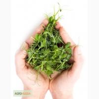 Продаю микрозелень и прорости