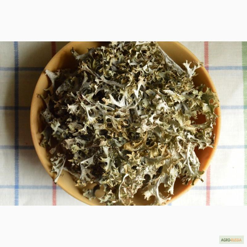лечебные травы для снижения холестерина в крови