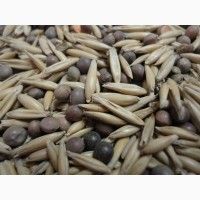 Семена вико-овес