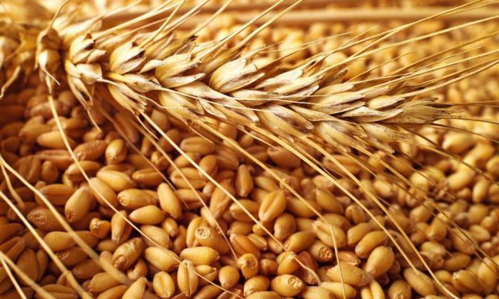 В странах ЕС снижаются прогнозы на урожай зерновых