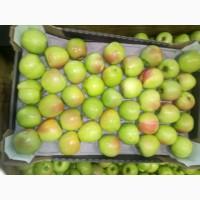 Яблоки оптом от производителя от 43 р/кг