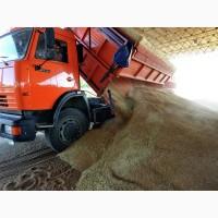 Свободные зерновозы.Услуги зерновозов