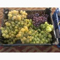 Винограда Чарос высокого качества готов к поставке оптом