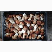 Белый гриб заморозка III сорт оптом и в розницу