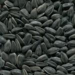 Продам семена подсолнечника Добрыня