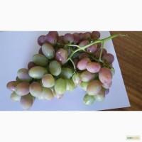 Продаем нектарини, персики и виноград из Узбекистана