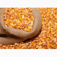 Зерно кукурузы и подсолнечника