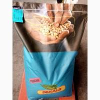 Гибриды зерновой кукурузы ЛИМАГРЕЙН